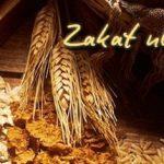Domande sulla Zakatul-Fitrah (Ayatullah Sistani)